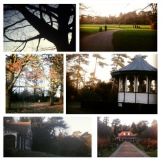 Collage of snaps taken in Bedford park.