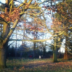 Christmas eve run in Bedford park.