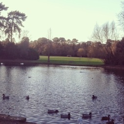 Running past the lake in Bedford park.